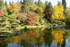 Full of beautiful fall colors at Japanese Garden, Seattle Washington stock photos
