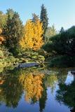 Full of beautiful fall colors at Japanese Garden, Seattle Washington royalty free stock photography