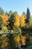 Full of beautiful fall colors at Japanese Garden, Seattle Washington. Beautifully landscaped trees and pond of fall colors at Japanese Garden, Seattle Washington Stock Image