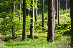 Beautifully lit forest Royalty Free Stock Photo