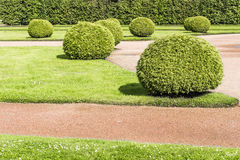 Green Bushes Shrubs In Garden Stock Photo Image 46369239