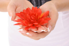 Beautifully manicured hands holding a flowers Stock Photo