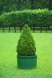Beautifully manicured park plant. Royalty Free Stock Photo