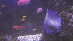 Beautifully Marine Aquarium with colorful fish stock footage video stock video footage