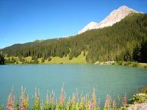 Beautifully panorama med en blå schweizisk sjö för smaragd med snö-täckte berg och blommor royaltyfri fotografi