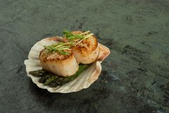 Gorgeous Scallops with asparagus on a shell. Beautifully prepared Scallops served with asparagus in a shell on slate Stock Photo