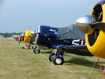 Beautifully restored North American AT-6 Texans. The photo of these Beautifully restored North American AT-6 Texans was taken during the annual EAA Airventure Stock Photos