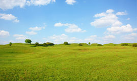 Beautifully summer day. Beautifully landscape world grass grassland plant Royalty Free Stock Photos