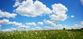 Beautifully summer day. Beautifully landscape world grass grassland plant Stock Photos