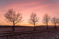 A row of trees during sunset in winter stock photos