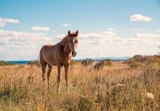 Beautifully unga hästar arkivbild