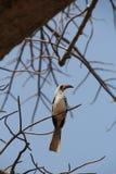 Beautifully view of birds at ruaha national park stock photography