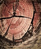Beautifully in wood Royalty Free Stock Photography