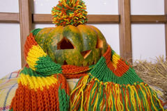 Beautifully wrapped pumpkin in a bright scarf. Autumn stock photos