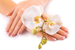 Beautifulmanicure with white orchid on white Stock Photography