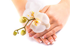 Beautifulmanicure with white orchid on white Stock Image