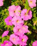 Beautifulpink花在庭院里 免版税库存照片