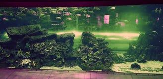 beautifulquarium and colorful fish