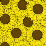 Beautifulseamless tło z słonecznikami. Obrazy Royalty Free