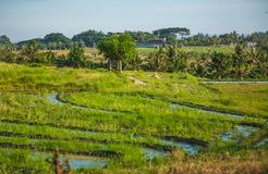 Beautifun Balinese landscape Royalty Free Stock Photography