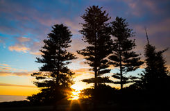 Beautilful Sunset and Silhouetted Trees Stock Photos