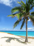 Beautiul exotic Caribbean seascape. Seascape from Cuba, Varadero, with palm trees , beach and azure ocean, amazing colors, paradise on earth Royalty Free Stock Photo