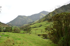 Beautiul landscape of the Cocora Valley, near to the colonial town of Salento, in Colombia. The Cocora Valley, a beautiful national park in the Eje Cafetero, an stock photography