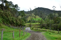 Beautiul landscape of the Cocora Valley, near to the colonial town of Salento, in Colombia. The Cocora Valley, a beautiful national park in the Eje Cafetero, an royalty free stock photo