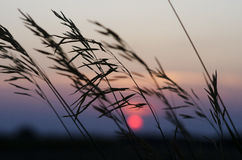 Beautiul solnedgång Arkivbilder
