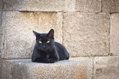 Beautoful greek black cat Stock Photography