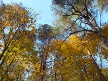 Autumn forest. Beautuful autumn forest and colored trees stock photos