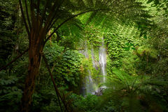 Beautuful waterfall in jungle tropic rain forest. Royalty Free Stock Image