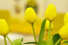 Beautuful yellow tulips Stock Image