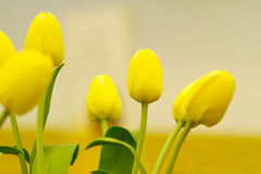 Beautuful yellow tulips Royalty Free Stock Photography