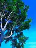 Tree in the sky. Beautufull views the blue sky with the green tree Royalty Free Stock Photography