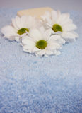 Beauty. Three white daisies and a soap on a blue towel Stock Images