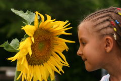 Beauty. Child looking a big sunflower Royalty Free Stock Photography