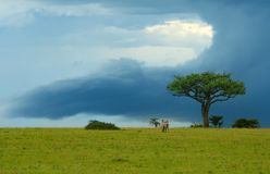 Beauty of Africa landscape. Kenya. Masai Mara royalty free stock image