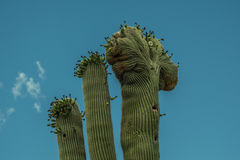 The Beauty of the Arizona Desert Stock Images