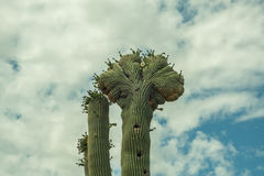 The Beauty of the Arizona Desert Royalty Free Stock Images