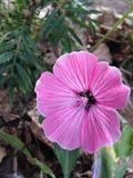 Beauty around us. Nice flowers on the ground Stock Image