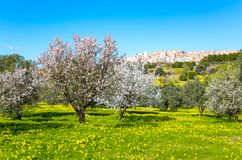 The beauty of art and nature of the Agrigento province. Italy, Sicily island, Agrigento, the city seen from the valley of the temples royalty free stock photo