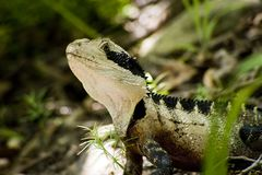 Beauty as a lizard Royalty Free Stock Photos