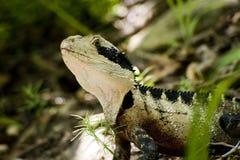 Beauty as a lizard Royalty Free Stock Photos
