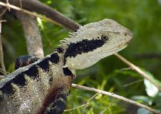 Beauty as a lizard Royalty Free Stock Images