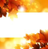 Beauty Autumn background with leaves and blank space for you design Royalty Free Stock Image