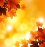 Beauty Autumn background with leaves Stock Photo