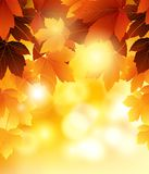Beauty Autumn background with leaves for you design Royalty Free Stock Photos