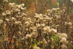 Beauty autumn background with thistles Stock Photos