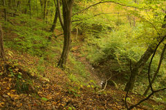 Beauty autumn forest. With leaves Stock Photo
